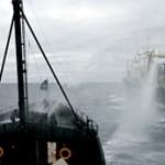 Sea Shepherd Conservation Society im Einsatz gegen Walfänger (Copyright www.seashepherd.org)